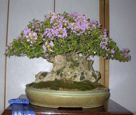 Bonsai oya