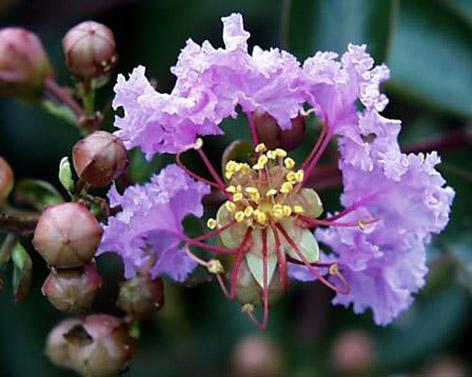 Lila çiçekli oya