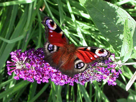 Kelebek calisi+kelebek